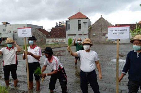 Badung Go Tani, Optimalkan Pemasaran Produk Pertanian Lokal Secara Online